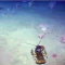 Oceana-Gulf St Lawrence Seafloor