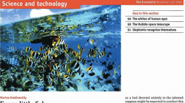 everylittlefish